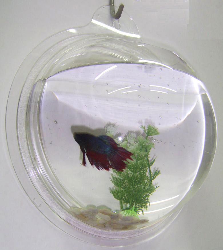 Wall hanging mount bubble acrylic aquarium bowl betta fish for Bubbles in betta fish tank